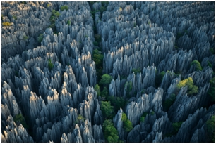 Jajaran Batu di The Stone Forest